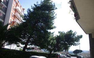 http://www.seguonews.it/al-piano-geraci-alberi-a-rischio-crollo-sos-dei-residenti-dopo-il-maltempo-non-sappiamo-a-chi-compete-tagliarli