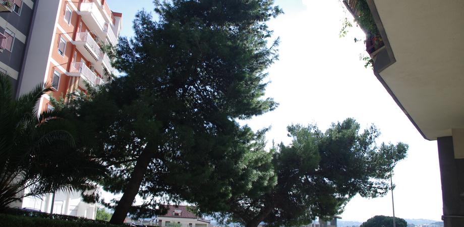 """Al Piano Geraci alberi a rischio crollo, sos dei residenti dopo il maltempo. """"Non sappiamo a chi compete tagliarli"""""""