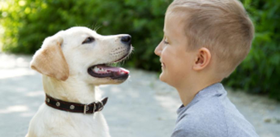 Vivere con gli animali: l'educazione prima di tutto
