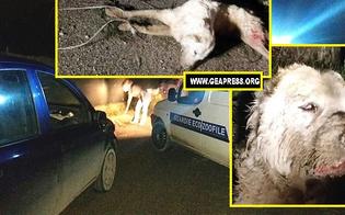 http://www.seguonews.it/morte-shock-per-le-strade-di-caltanissetta-cane-legato-e-trainato-da-unauto-la-denuncia-delle-guardie-zoofile-delloipa