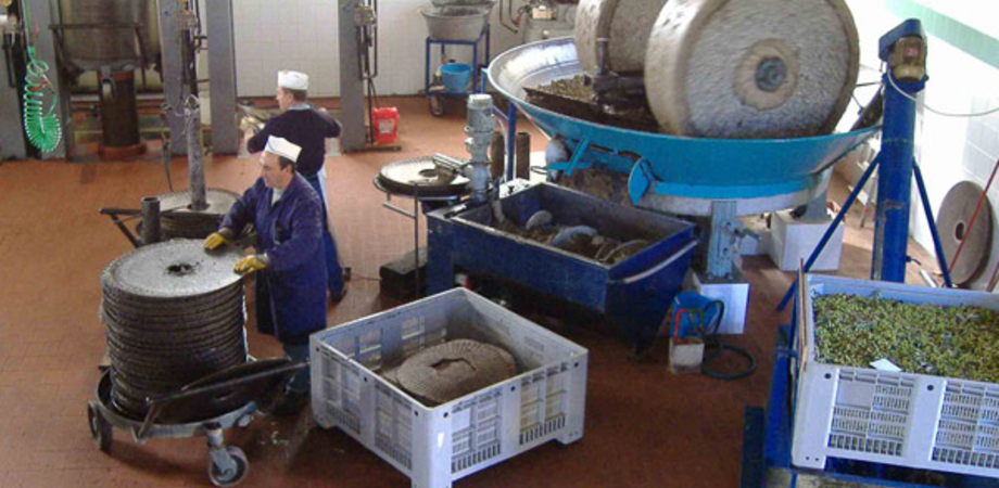 Truffato un agricoltore di San Cataldo. Gli acquirenti pagano l'olio con banconote false