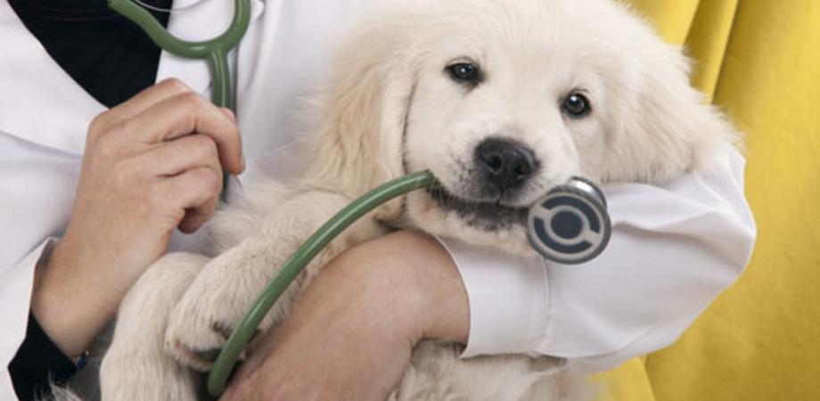 """Quando il """"dottore"""" è il veterinario: tutto quello che bisogna sapere sugli animali domestici"""