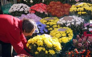 http://www.seguonews.it/ognissanti-i-consigli-di-coldiretti-sui-prezzi-dei-fiori-non-fate-acquisti-di-impulso-tre-su-quattro-andranno-al-cimitero