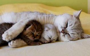 http://www.seguonews.it/il-legame-tra-la-gatta-e-i-suoi-cuccioli-durante-e-dopo-la-gravidanza