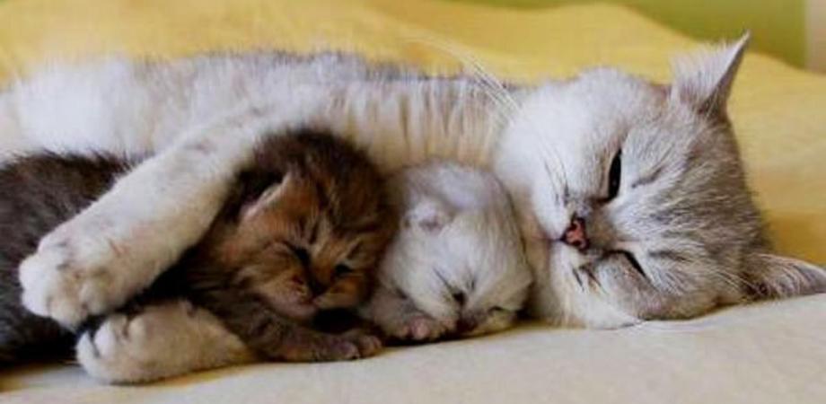 Il legame tra la gatta e i suoi cuccioli durante e dopo la gravidanza