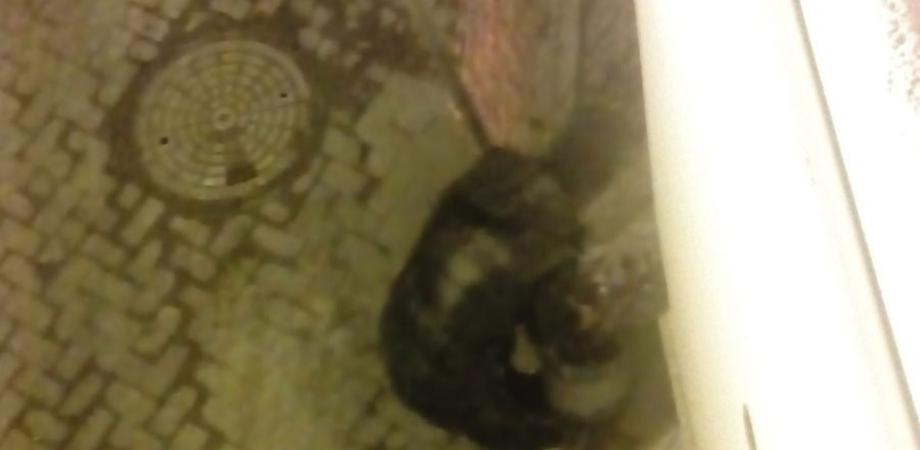 Furto sventato a San Cataldo. Un cittadino fotografa il ladro in azione e chiama il 113