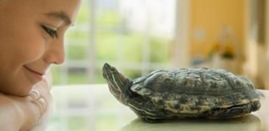 La veterinaria racconta la Sicilia e le sue piccole tartarughe