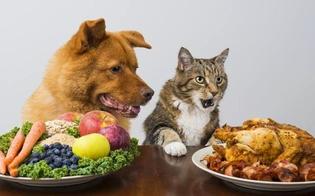 http://www.seguonews.it/la-veterinaria-agli-amici-a-quattro-zampe-razionalizzate-i-pasti