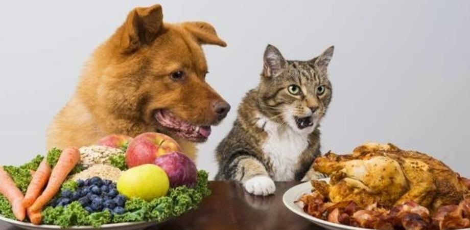 """La veterinaria: """"Agli amici a quattro zampe razionalizzate i pasti"""""""
