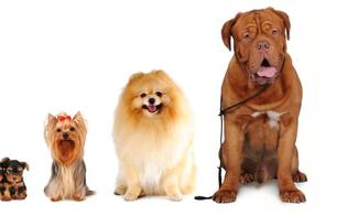 http://www.seguonews.it/cani-denti-e-alimentazione-dei-mammiferi-che-derivano-dai-lupi