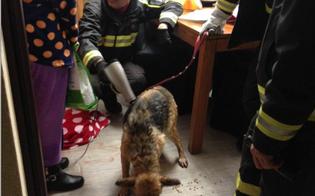 http://www.seguonews.it/caltanissetta-cane-rischia-di-annegare-nella-cisterna-salvato-in-extremis-dai-vigili-del-fuoco