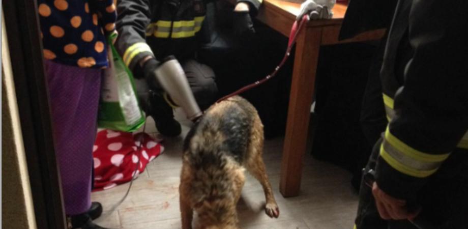 Caltanissetta. Cane rischia di annegare nella cisterna, salvato in extremis dai vigili del fuoco