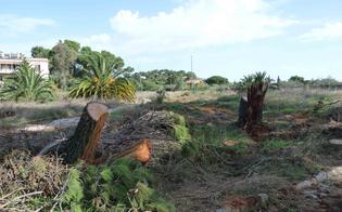 http://www.seguonews.it/gli-alberi-tagliati-dal-parco-dubini-non-ci-fu-reato-archiviata-linchiesta-per-il-direttore-del-118-elio-barnaba