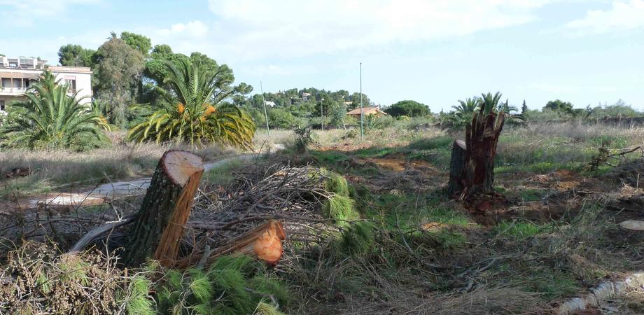 Gli alberi tagliati del parco Dubini, non ci fu reato. Archiviata l'inchiesta per il direttore del 118 Elio Barnabà