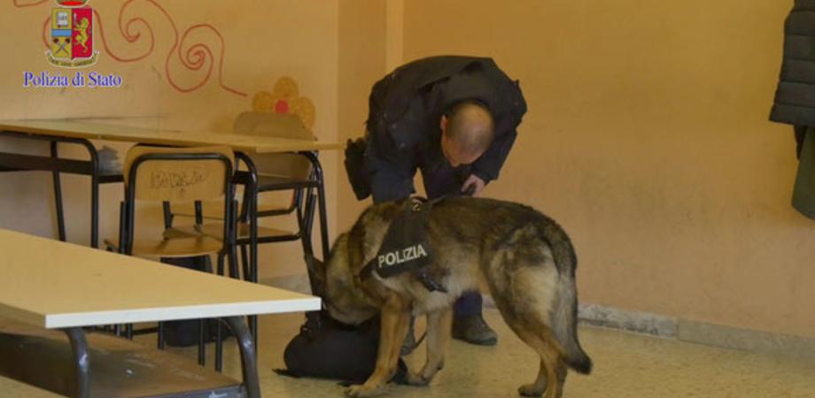 Cane poliziotto trova droga in una scuola a Caltanissetta. Hashish nascosto dietro un termosifone