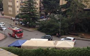 http://www.seguonews.it/caltanissetta-albero-si-sradica-in-via-leone-xiii-e-precipita-sulla-strada-nessun-ferito