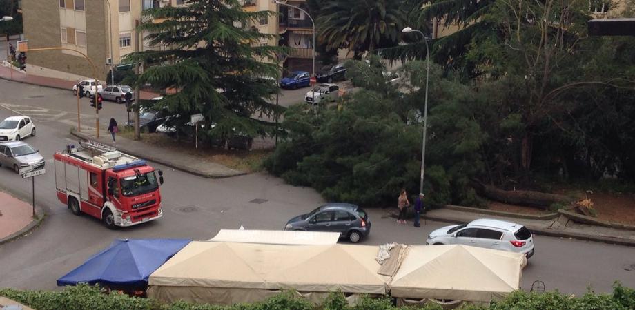 Caltanissetta. Albero si sradica in via Leone XIII e precipita sulla strada: nessun ferito