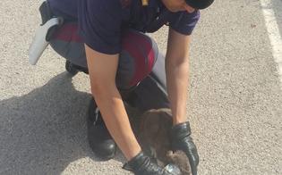 http://www.seguonews.it/storie-dallasfalto-gatto-rotola-incastrato-sulla-626-salvato-da-agenti-polstrada