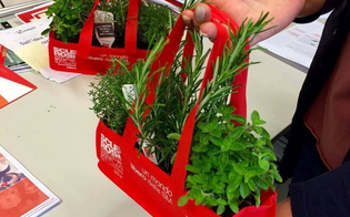 http://www.seguonews.it/aism-erbe-aromatiche-per-la-ricerca-dal-21-al-27-maggio-i-banchetti-nel-nisseno