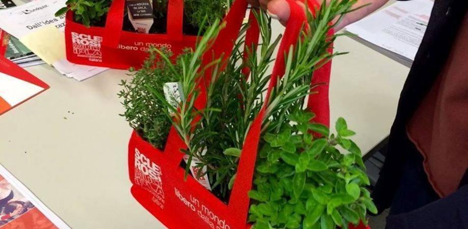 Aism, erbe aromatiche per la ricerca. Dal 21 al 27 maggio i banchetti nel Nisseno