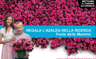 http://www.seguonews.it/azalea-della-ricerca-l8-maggio-nelle-piazze-di-caltanissetta-liniziativa-airc