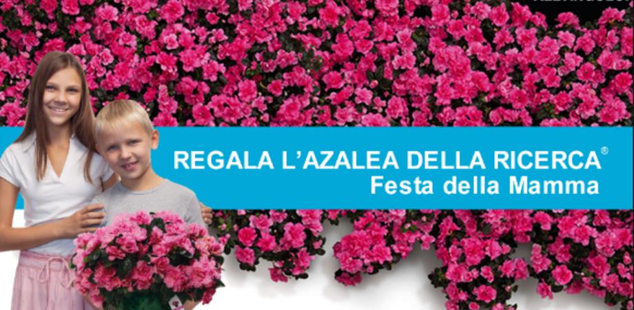 Azalea della ricerca. L'8 maggio nelle piazze di Caltanissetta l'iniziativa Airc
