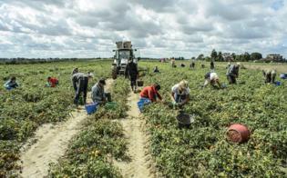 https://www.seguonews.it/prodotti-fitosanitari-lispettorato-per-lagricoltura-di-caltanissetta-organizza-un-corso