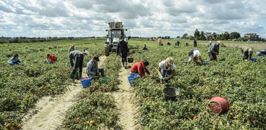 Prodotti fitosanitari, l'ispettorato per l'Agricoltura di Caltanissetta organizza un corso di formazione