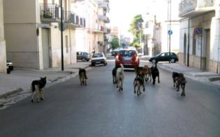 http://www.seguonews.it/randagismo-a-caltanissetta-la-ricetta-del-m5s-sabato-incontro-con-associazioni-e-veterinari