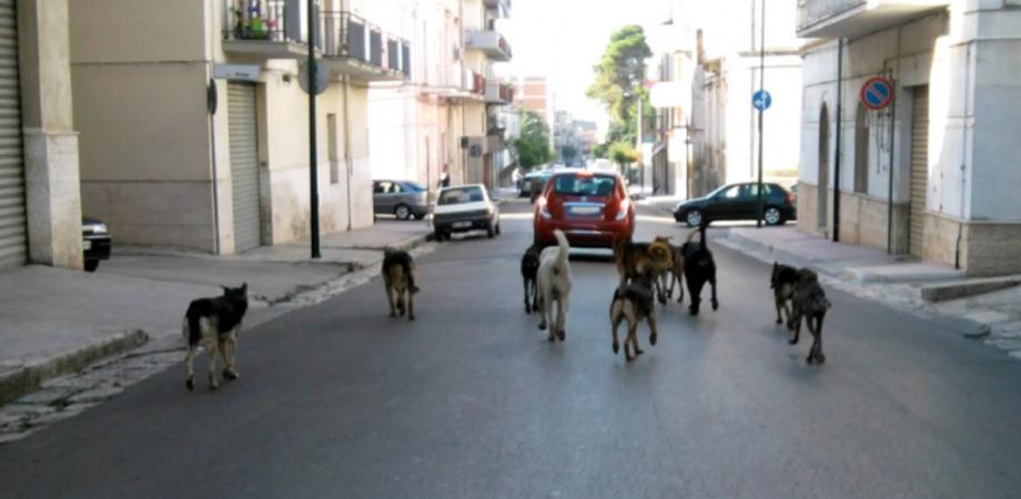 Randagismo a Caltanissetta, la ricetta del M5S. Sabato incontro con associazioni e veterinari