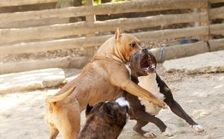 http://www.seguonews.it/combattimenti-tra-pitbull-a-caltanissetta-condannati-due-giovani-pagheranno-maxi-multa