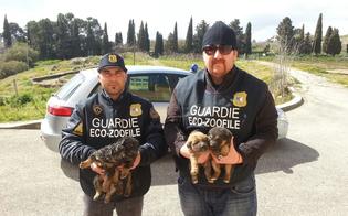 http://www.seguonews.it/arriva-lestate-primi-cani-abbandonati-a-caltanissetta-guardie-eco-zoofile-avviano-i-controlli