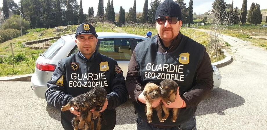 Arriva l'estate, primi cani abbandonati a Caltanissetta. Guardie eco-zoofile avviano i controlli