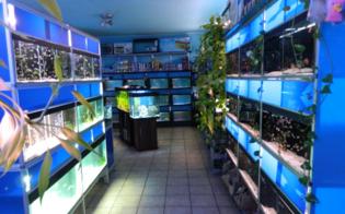 http://www.seguonews.it/caltanissetta-furto-in-un-negozio-di-animali-spariti-800-euro-dal-borsello-del-negoziante