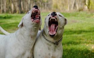 http://www.seguonews.it/bimbo-morto-sbranato-da-due-cani-di-famiglia-indagata-la-madre-per-omicidio-colposo