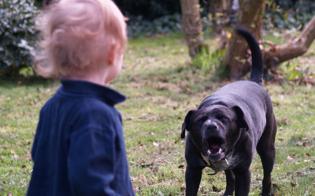 http://www.seguonews.it/bambino-sbranato-dai-cani-il-codacons-chiede-patentino-per-razze-pericolose-basta-tragedie