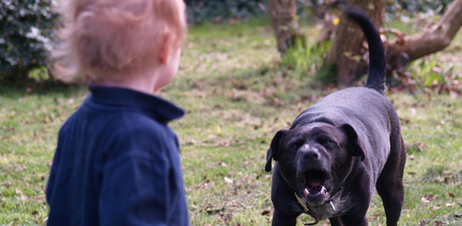 """Bambino ucciso dai cani: il Codacons chiede patentino per razze pericolose. """"Basta tragedie"""""""