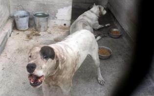 http://www.seguonews.it/nessuno-tocchi-i-dogo-petizione-online-per-salvare-i-due-cani-che-hanno-sbranato-il-bambino