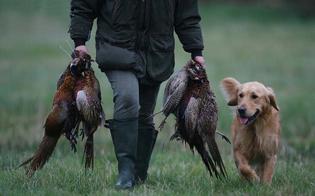 http://www.seguonews.it/caccia-in-sicilia-da-domani-si-spara-wwf-caltanissetta-duro-colpo-per-la-fauna