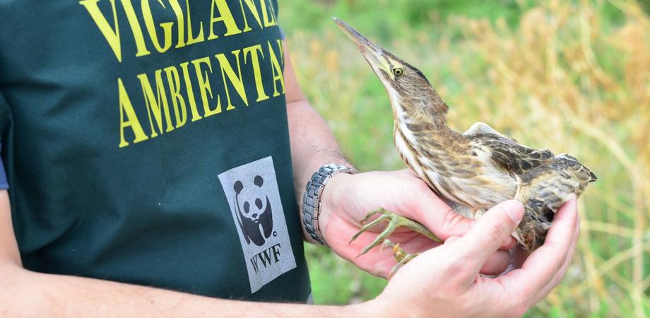 Serradifalco. Pascolo abusivo e abbandono, il Wwf denuncia degrado nella riserva lago Soprano