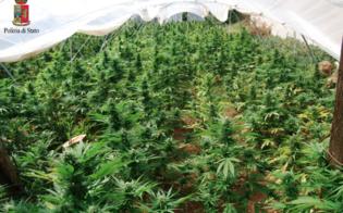 http://www.seguonews.it/mille-piante-di-marijuana-nella-serra-di-pomodori-blitz-della-polizia-nel-nisseno-tre-arresti
