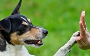 http://www.seguonews.it/educazione-cinofila-al-liceo-classico-settimo-due-incontri-per-conoscere-i-cani