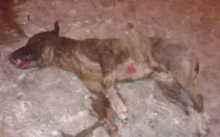 http://www.seguonews.it/cane-torturato-e-bruciato-a-caltanissetta-il-wwf-al-prefetto-piu-controlli-sui-reati-contro-animali
