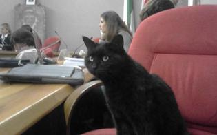 Curiosità al consiglio comunale di Milano: Puma il gatto randagio non si perde neanche una seduta