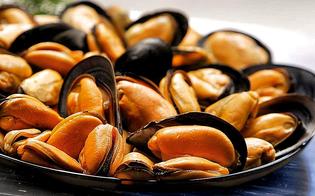 https://www.seguonews.it/cozze-mediterranee-dalla-spagna-confezionate-in-italia-contaminate-con-salmonella