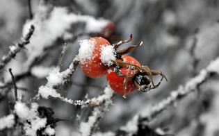 Arriva il freddo in Sicilia: si annuncia Capodanno gelido, a Caltanissetta primi fiocchi di neve