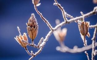Meteo: dopo il caldo anomalo di Natale previsto l'arrivo di un gelido Capodanno
