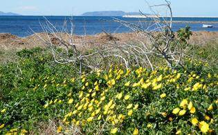 http://www.seguonews.it/al-via-calmarsi-progetto-life-salvare-la-calendula-maritima-lunico-esemplare-sicilia