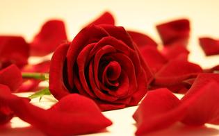 http://www.seguonews.it/san-cataldo-giovane-vita-spezzata-24-anni-muore-malattia-combattuta-alla-fine