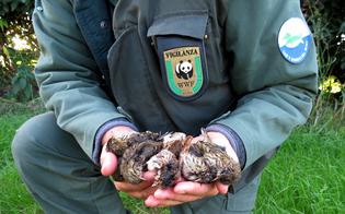 Appello del Wwf Sicilia a Croceta e Cracolici: fauna già provata dal gelo, la caccia va sospesa